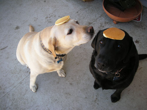 Two dogs, two pancakes