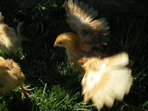 Debbie shows us her wings