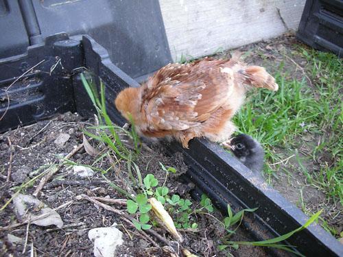 Liza and Joan on the compost bin