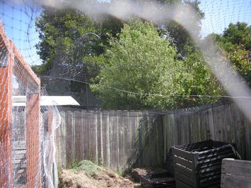 Aviary netting over the chicken yard