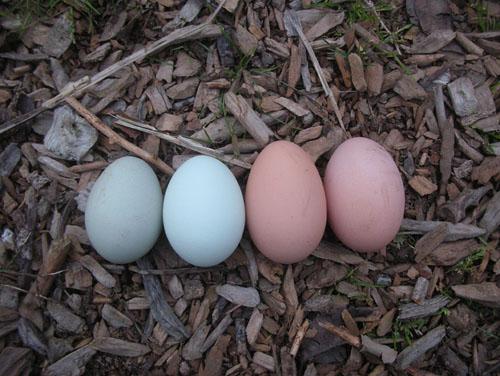 Four eggs in a row