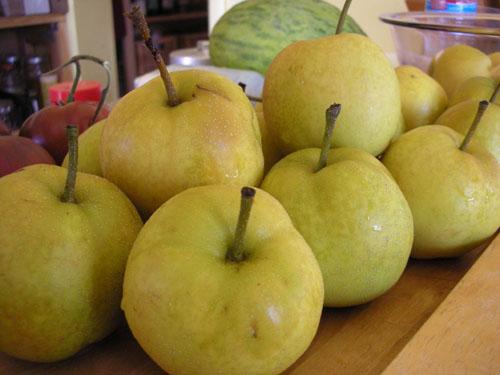 Windfall Asian pears