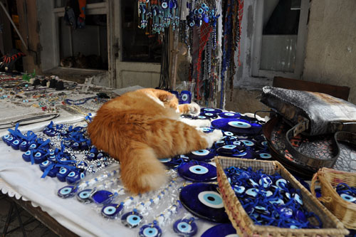 Cat on a vendor table