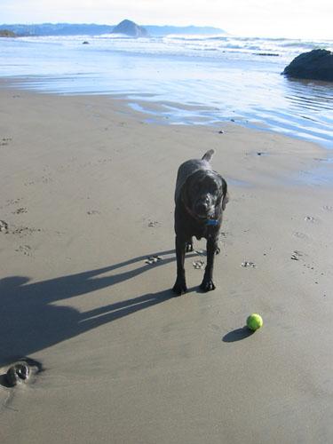 Rosie's ball