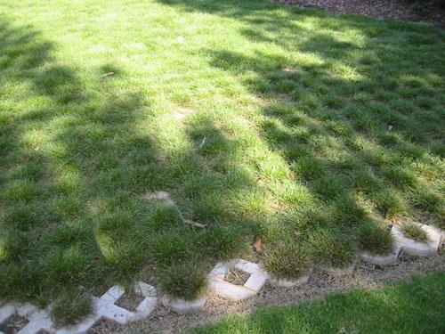 drivable lawn