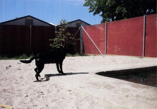 dogcamp-2.jpg